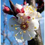 émerveillement du retour du printemps