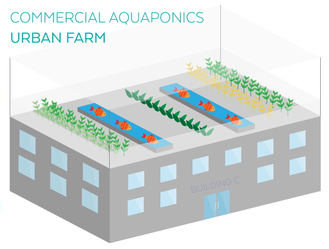 Commercial Aquaponics Urban Farming