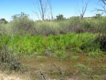 yarra creek07 swale