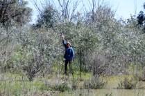 waikerie-ferry-sprinkler-seedlings-raelene