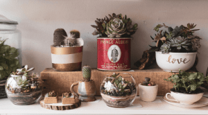 cacti and succulents on a shelf
