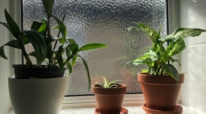 orchid, spider plant, and diffenbachia