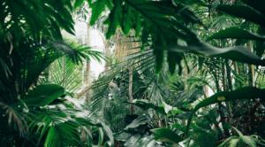 house plant jungle