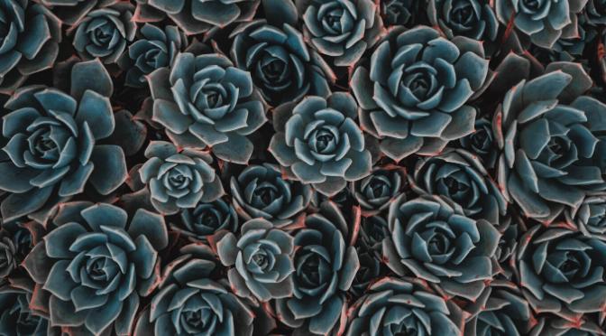teal succulents
