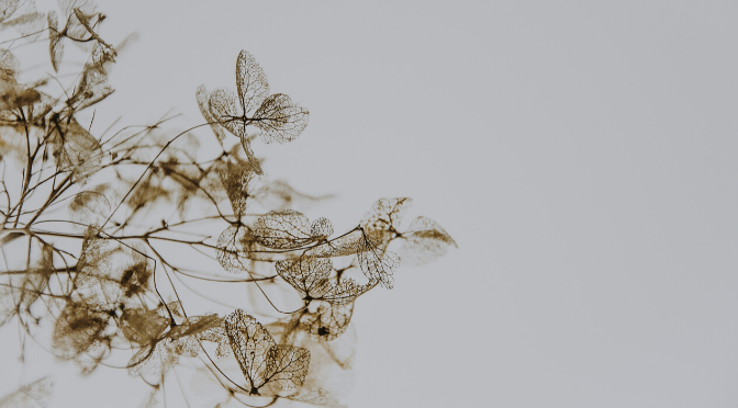picture of dried flowers