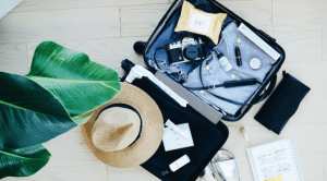 house plant and suitcase