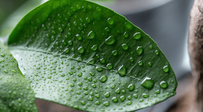 9 ways you can increase the humidity in your home