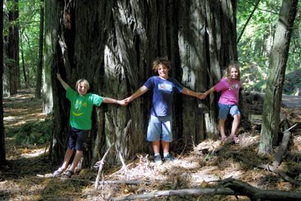 its-a-big-tree01.jpg