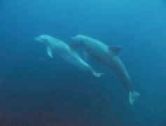 dauphins saintes 1