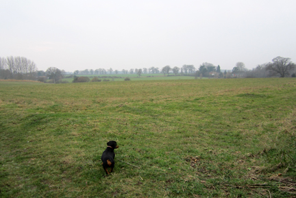 a damp Norfolk walk with a dachshund