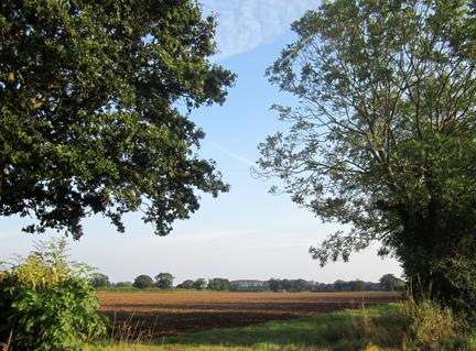 Norfolk field