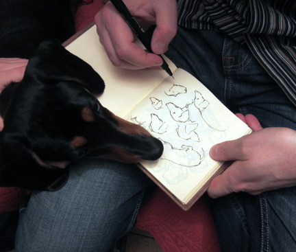 miniature dachshund being drawn