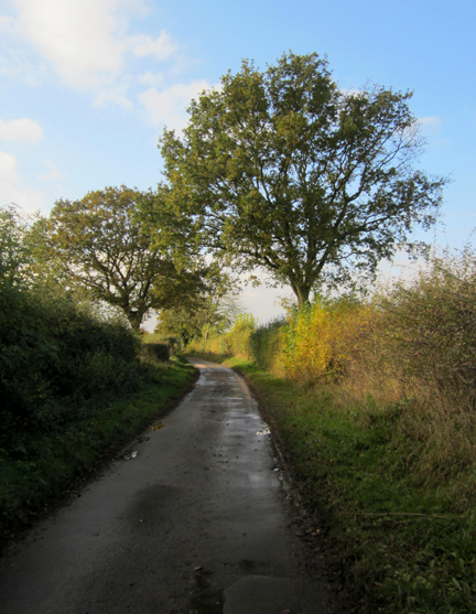 country lane on Norfolk Nature Walk