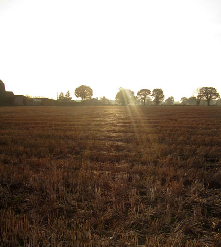 Autumn sun on stubble