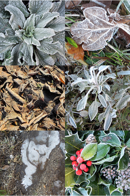 Montage of Ice covered leaves
