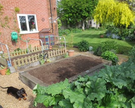 veg patch