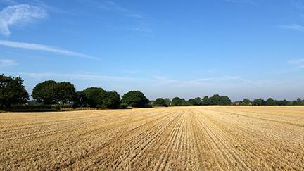 A little post - Norfolk in August
