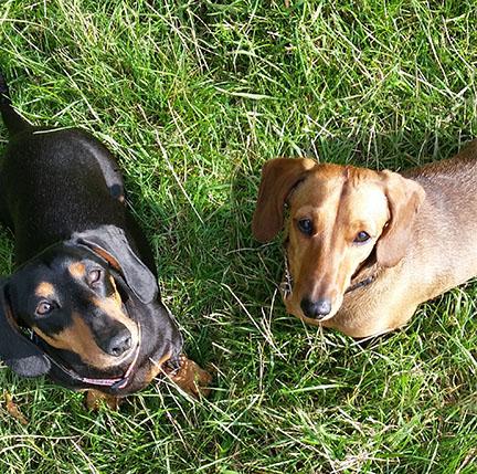 Higgins&Coco