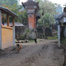 Farm track through the back of the compound with village temple doorway