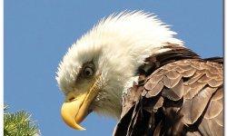 Bird Calendar1_001