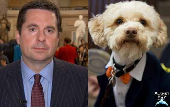 Rep. Devin Nunes Snaps, Thinks he is a Cockapoo