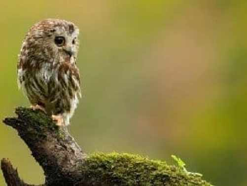 search-for-owls-stony-brook-millstone-watershed-association-penington-nj1-1