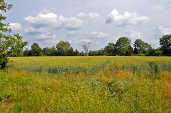 Another 59 acres of land in Montgomery Township will be added to the Sourlands. Photo courtesy of Montgomery Township.