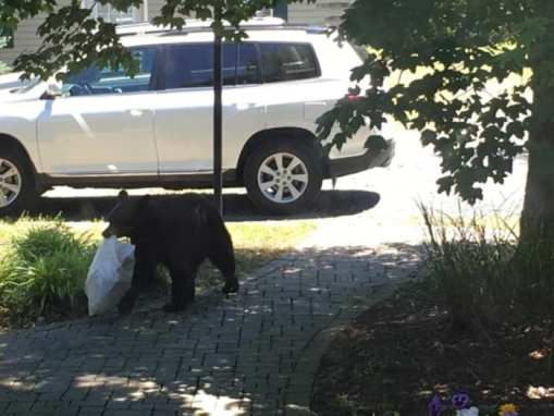 bear trash