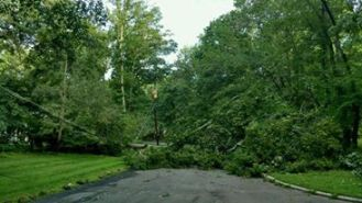 tree down by Charles Yedlin