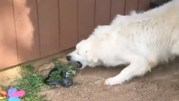 Dog throws snake on its owner down in Tennessee. I do not own the rights to the video.