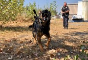 Police Dogs Are Being Fitted With Body Cameras So They Can Scout For Their Handlers | TIME