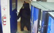 Bear Opens Door to California Police Facility and Walks Around Inside