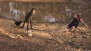 Kangaroo Kicks Man Who Manages To Still Hold On To His Beer!