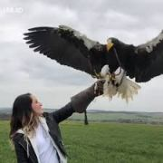 The Size of It: Woman Holds A Huge Eagle!