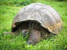 Galapagos Travel Tips: Turtle