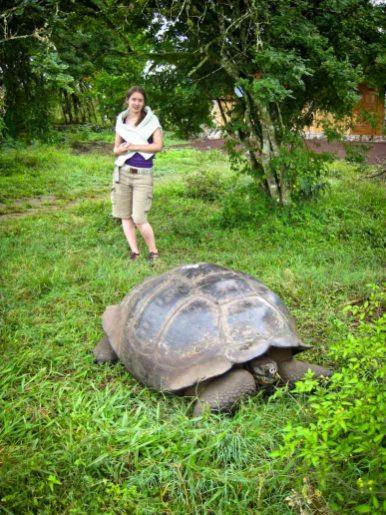 Galapagos Travel Tips: Wild Life - Turtle