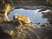 Galapagos Travel Tips: Wild Life