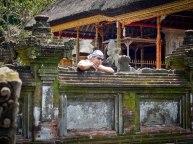 indonesia-2-ubud-96