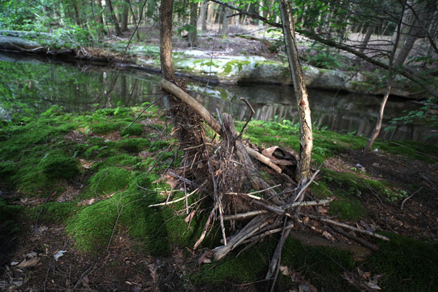 Evidence of Hurricane Irene can still be seen on the Grandmother Land in Ulster County, NY. Hundreds of these woodpiles collected against trees when the stream overflowed its banks. Photo in June 2012 by Eric Francis.
