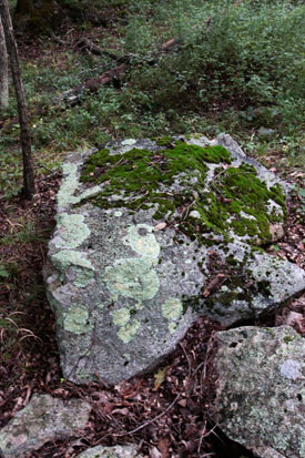Moss and lichen grow on a rock near the Coxing on the Grandmother Land in Ulster County, NY.