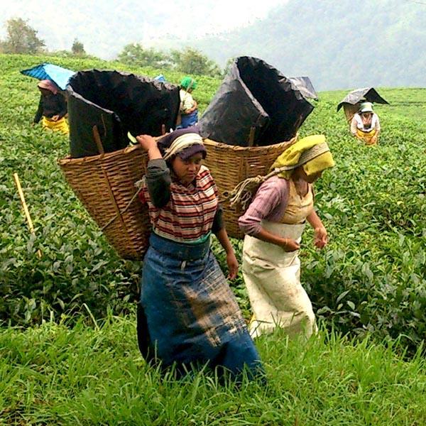 DSC_0644_temi tea garden_QUAD