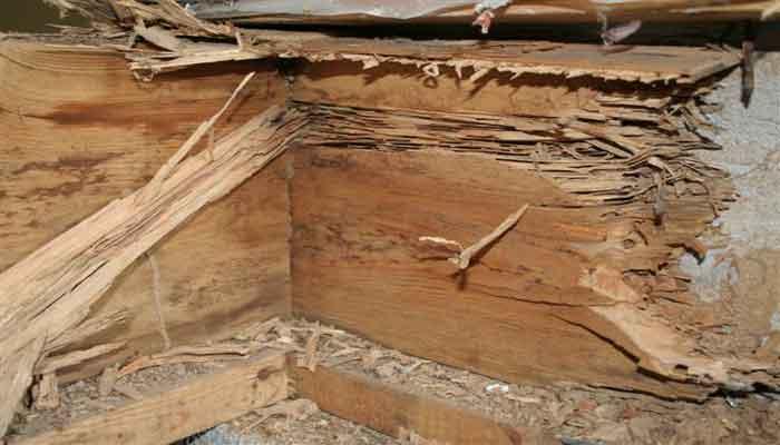 Termites et frais de gestion