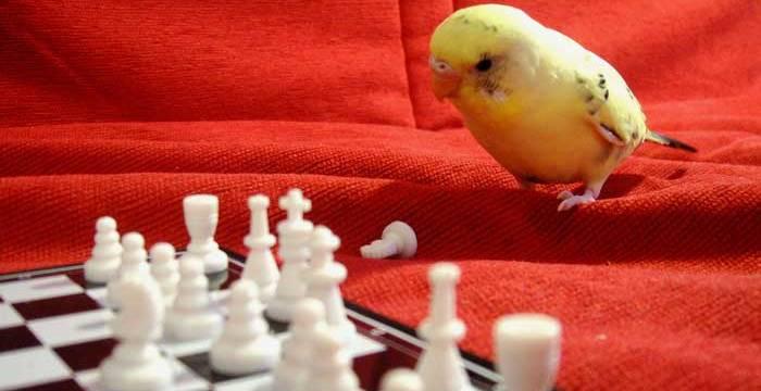 Une perroquet pensant