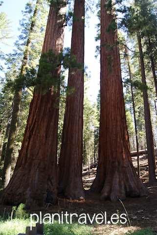Que ver en Yosemite National Park 2