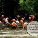 Consejos para viajar a países exóticos