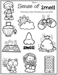 Preschool 5 Senses Worksheet - Sense of Smell