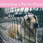 How to Adopt a Pet in Plano