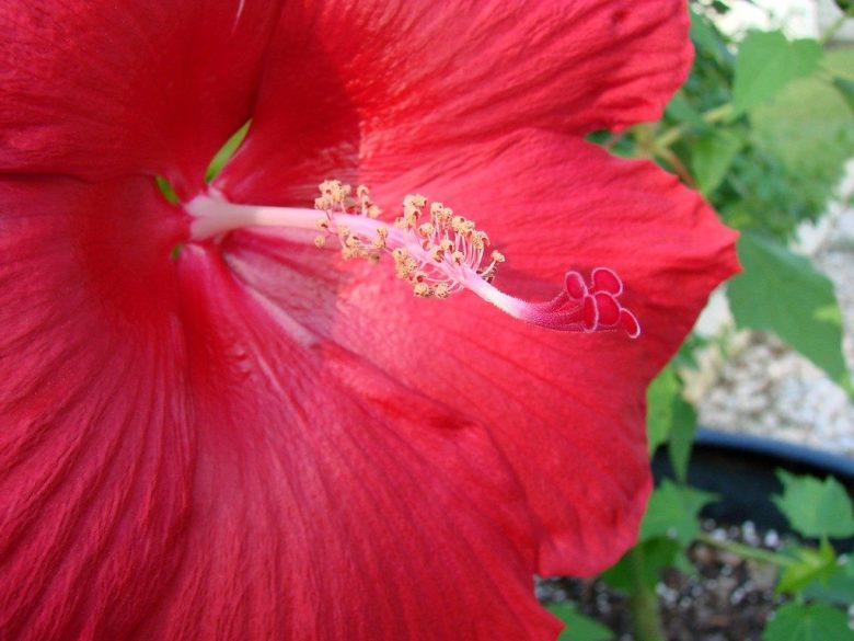 Gardening, Plano, Outdoors, Texas