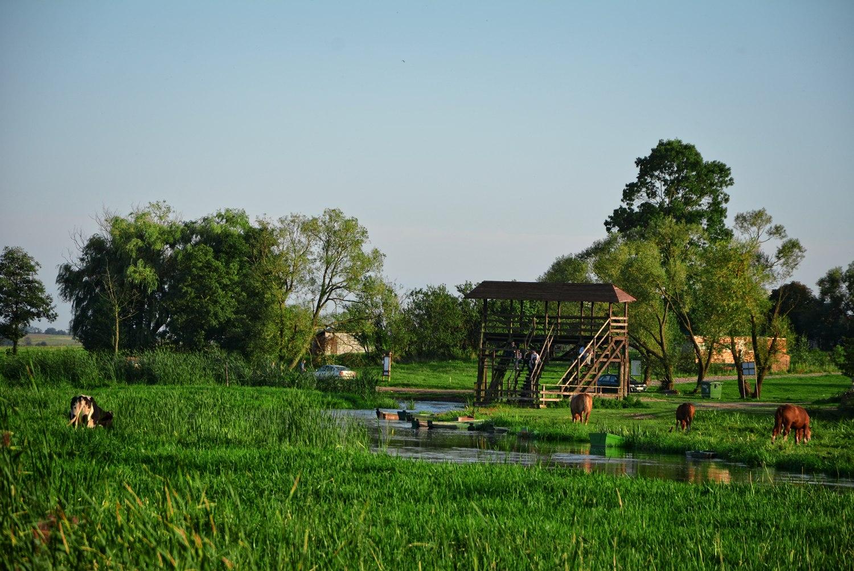 Green Velo poland narew river narew national park waniewo
