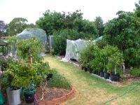 Robwhite1's Edible Backyard